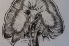 Diaphragm-sketch